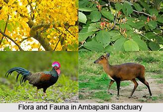 Ambapani Sanctuary, Orissa