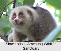 Amchang Wildlife Sanctuary, Assam