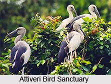 Attiveri Bird Sanctuary, Karnataka