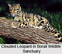 Borail Wildlife Sanctuary, Assam