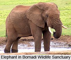Bornadi Wildlife Sanctuary, Assam