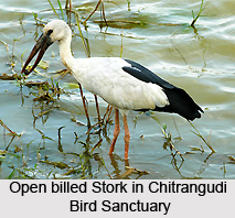 Chitrangudi Bird Sanctuary, Tamil Nadu