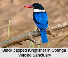 Coringa Wild Life Sanctuary, Andhra Pradesh