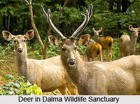 Dalma Wildlife Sanctuary, Jamshedpur