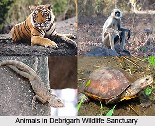 Debrigarh Wildlife Sanctuary, Orissa