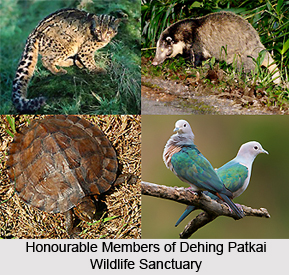 Dehing Patkai Wildlife Sanctuary, Assam