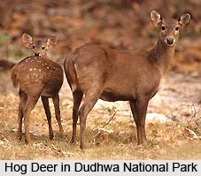Dudhwa National Park, Uttar Pradesh