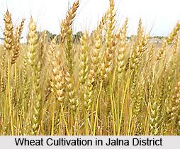 Economy of Jalna District, Maharashtra