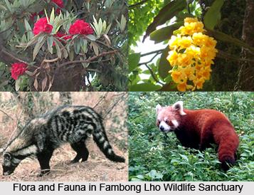 Fambong Lho Wildlife Sanctuary, Sikkim