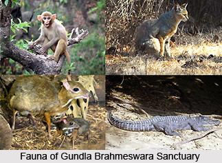 Gundlu Brahmeswaram Sanctuary, Andhra Pradesh