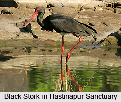 Hastinapur Sanctuary, Uttar Pradesh