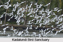 Kadalundi Bird Sanctuary, Kerala