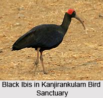 Kanjirankulam Bird Sanctuary, Tamil Nadu