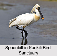 Karikili Bird Sanctuary, Tamil Nadu
