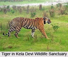 Kela Devi Wildlife Sanctuary, Rajasthan