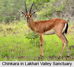 Lakhari Valley Sanctuary, Orissa