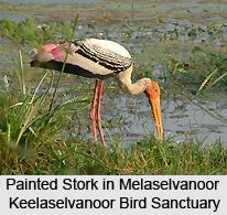 Melaselvanoor Keelaselvanoor Bird Sanctuary, Tamil Nadu