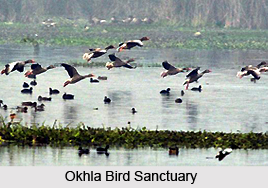 Okhla Bird Sanctuary, Delhi