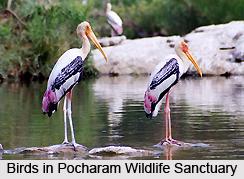 Pocharam Wildlife Sanctuary, Andhra Pradesh
