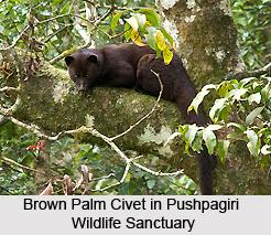 Pushpagiri Wildlife Sanctuary, Karnataka
