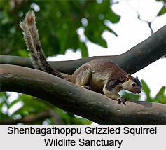 Shenbagathoppu Grizzled Squirrel Wildlife Sanctuary, Assam