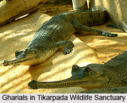 Tikarpada Wildlife Sanctuary, Orissa