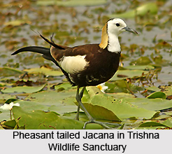 Trishna Wildlife Sanctuary, Tripura