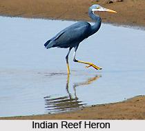 Udhayamarthandapuram Bird Sanctuary, Tamil Nadu