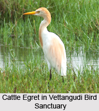 Vettangudi Bird Sanctuary, Tamil Nadu