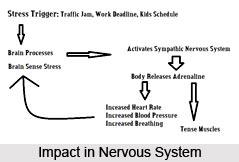 Impact Of Yoga On Nervous System