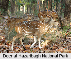 Wildlife Sanctuaries of Jharkhand