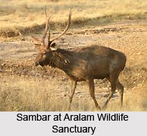 Aralam Wildlife Sanctuary, Kerala