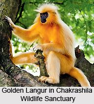 Chakrashila Wildlife Sanctuary, Assam