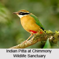 Chimmony Wildlife Sanctuary, Kerala