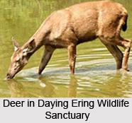 Daying Ering Wildlife Sanctuary, Arunachal Pradesh