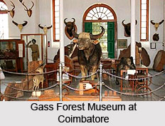 Gass Forest Museum at Coimbatore, Tamil Nadu