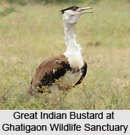 Ghatigaon Wildlife Sanctuary, Gwalior District, Madhya Pradesh