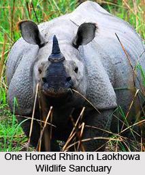 Laokhowa Wildlife Sanctuary