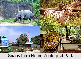 Nehru Zoological Park, Hyderabad, Telangana