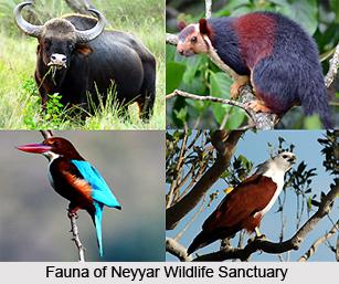 Neyyar Wildlife Sanctuary, Kerela