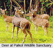 Palkot Wildlife Sanctuary, Jharkhand