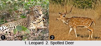 Peechi Vazhani Wildlife Sanctuary, Kerala