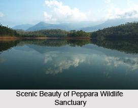 Peppara Wildlife Sanctuary, Kerela