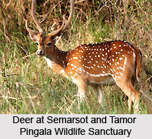 Semarsot and Tamor Pingala Wildlife Sanctuary, Chhattisgarh