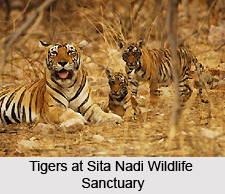 Sita Nadi Wildlife Sanctuary, Chhattisgarh