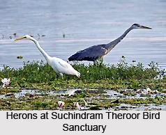 Suchindram Theroor Bird Sanctuary, Tamil Nadu