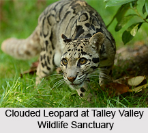 Talley Valley Wildlife Sanctuary, Arunachal Pradesh