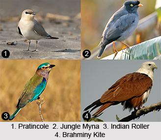Udhuwa Lake Bird Sanctuary, Jharkhand
