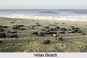 Velas Beach, Maharashtra