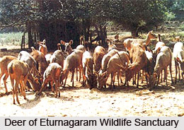 Wildlife Sanctuaries of Telangana